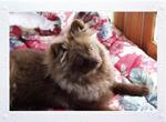Kameko in the Flower Bed