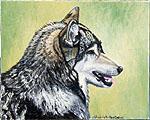 Wolf Resting