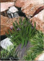 Rocks in Bloom - Print