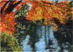 New England Fall Reflection - Print