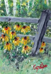 Black-Eyed Susans on the Fence