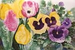 Tulips & Pansies