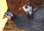 Guinea Hen Couple