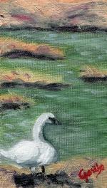Gazing Swan